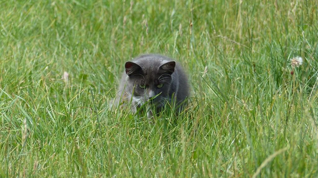 Katze im Gras