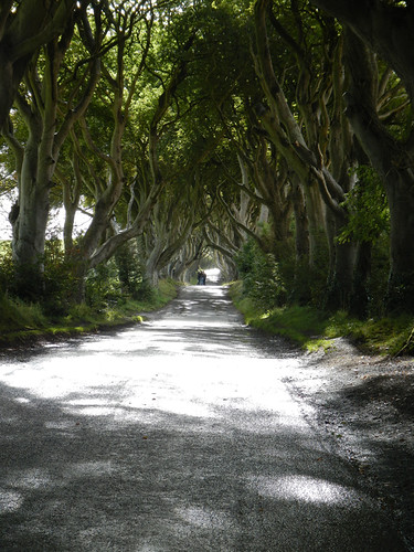 The narrow road through Dark Hedges in Ireland, UK
