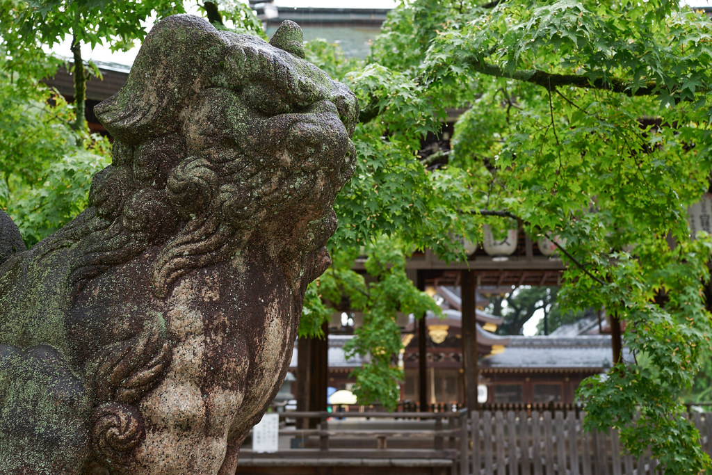 Komainu @Imamiya shrine 狛犬@今宮神社