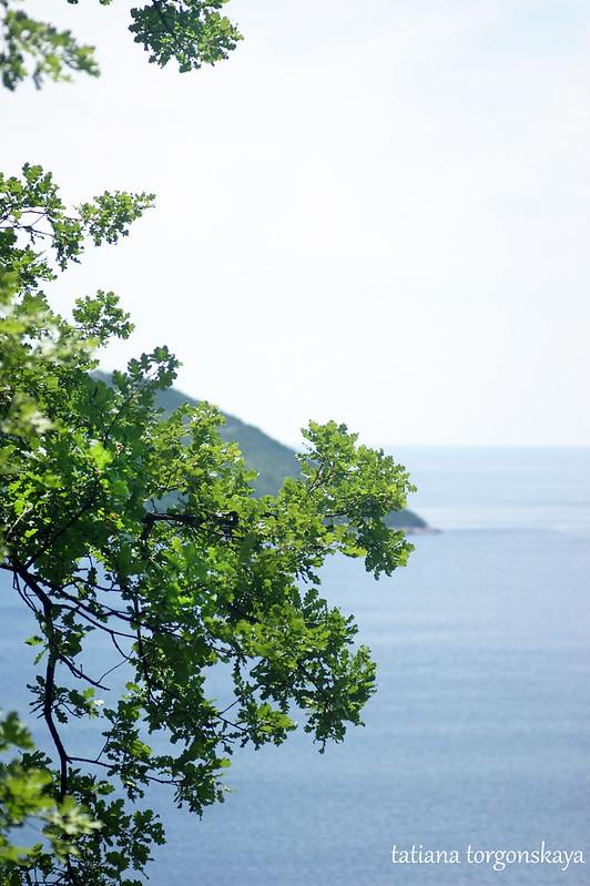 Вид на море сквозь ветви дуба