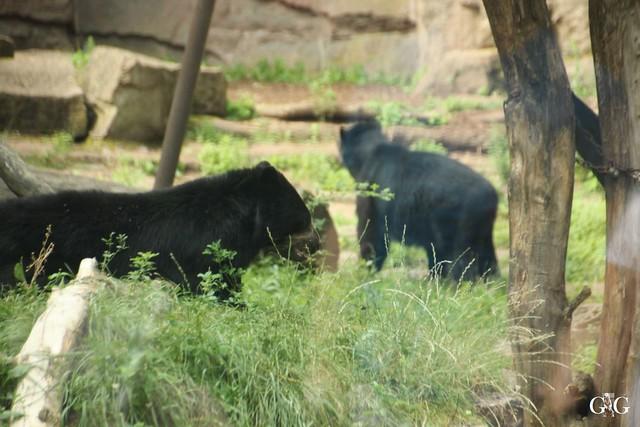 Besuch Tierpark Friedrichsfelde 20.07.20163
