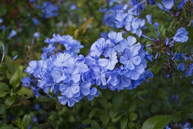 Och blommorna var ju så vackra