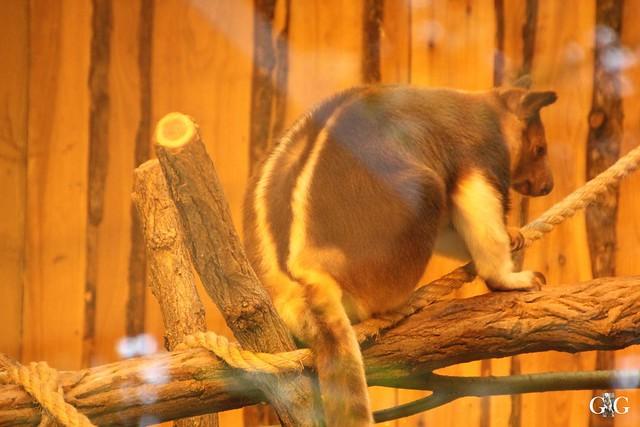 Besuch Zoo Rostock 09.07.201675