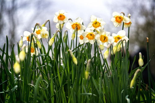 A Chorus of Narcissus