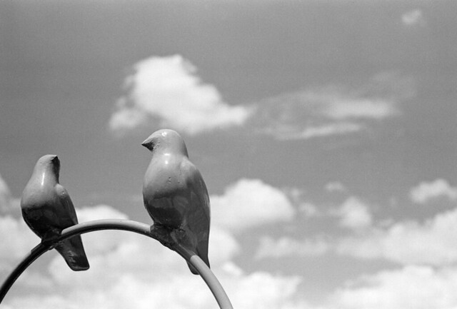 blue sky and pigeon