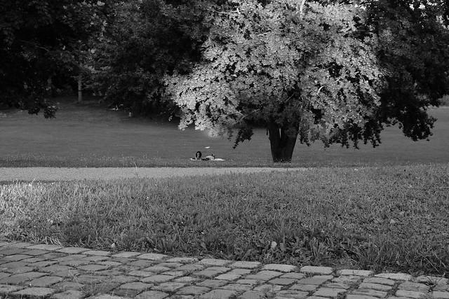 Wertwiesenpark, Heilbronn