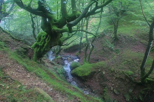 Parque Natural de #Gorbeia #DePaseoConLarri #Flickr - -895