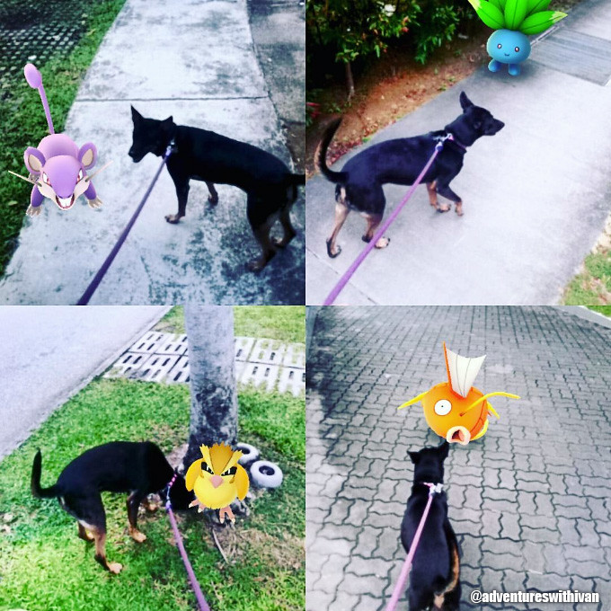 pokemon go sg mongrel dog