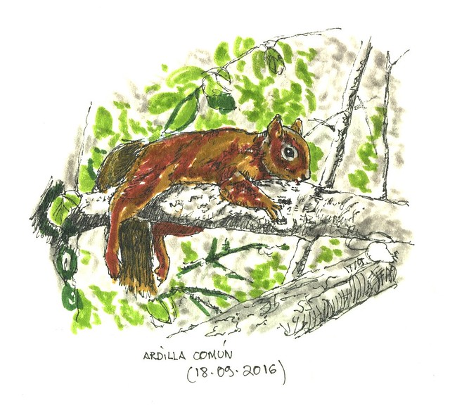 Ardilla común (Sciurus vulgaris)