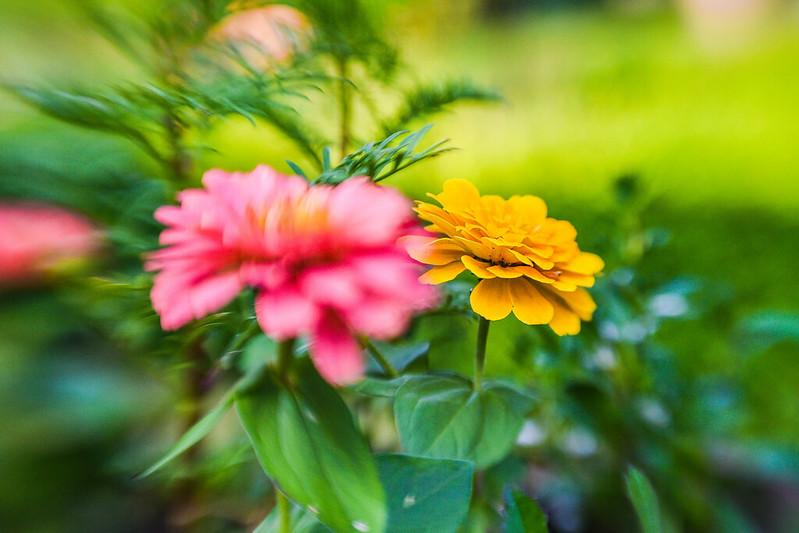 Evry Daily Photo - Fleur essais avec le lensbaby