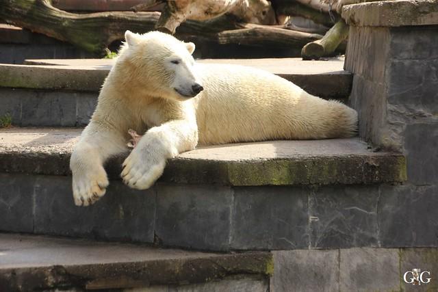 Zoo Rostock 1.Teil 20.08.20169