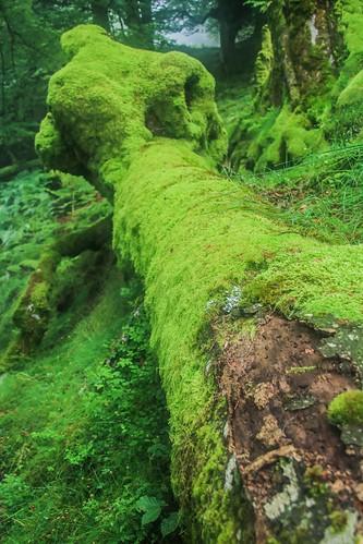 Parque Natural de #Gorbeia #DePaseoConLarri #Flickr - -893