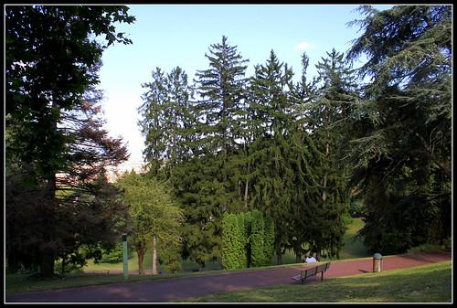 Picea abies - Epiceas vénérables