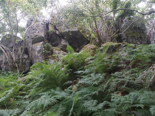 Leigh Tor (lower outcrop)