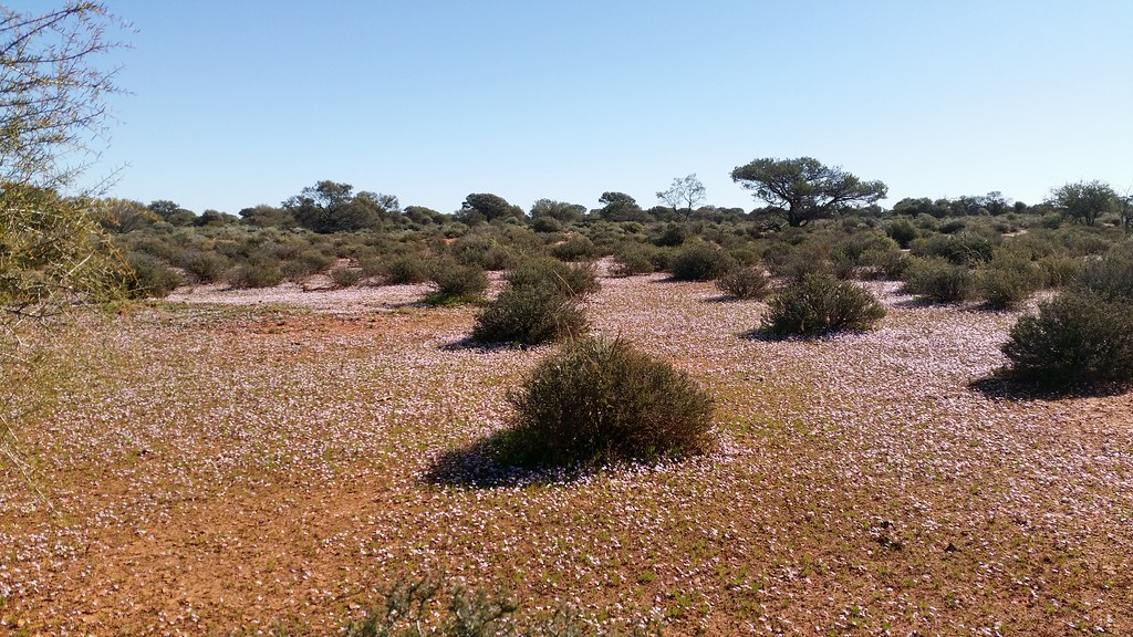 a carpet of wildflowers along Lakeside Road