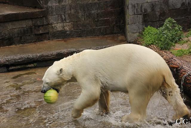 Besuch Zoo Rostock 09.07.20165