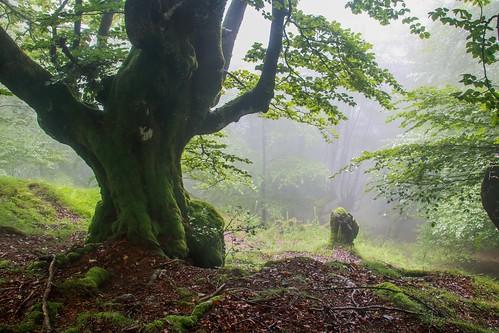 Parque Natural de #Gorbeia #DePaseoConLarri #Flickr - -852