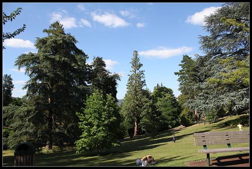 vue- cèdres et séquoias