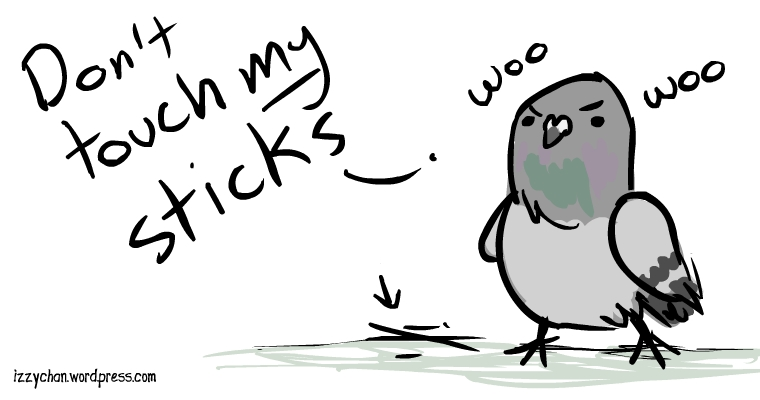 don't touch my sticks grey pigeon