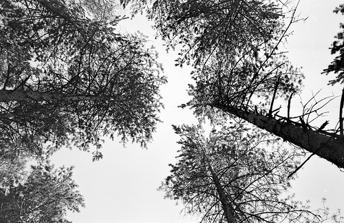 picture of treetops