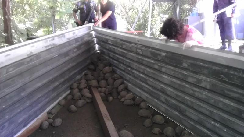Decomisan más de 200  tortugas terrestres en Metapán (28/07/2016)