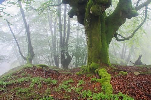 Parque Natural de #Gorbeia #DePaseoConLarri #Flickr - -855