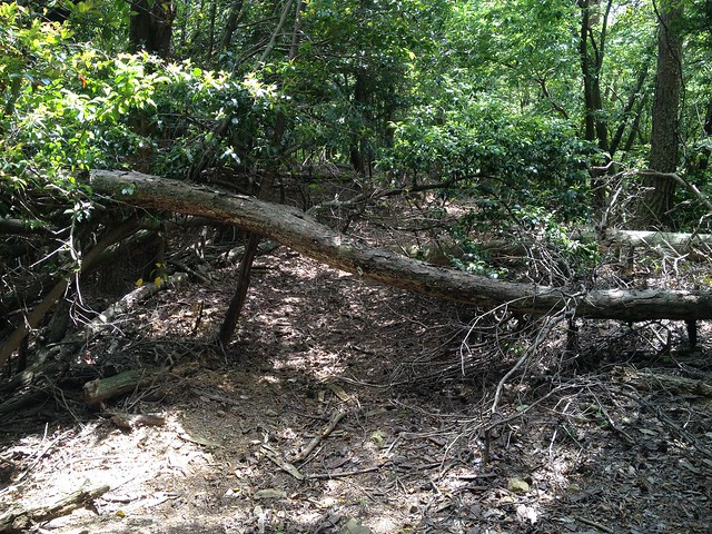 不破の滝 大滝林間歩道 倒木